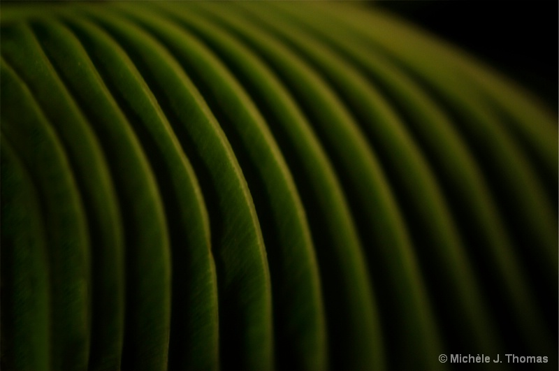 Hosta From A Different View !