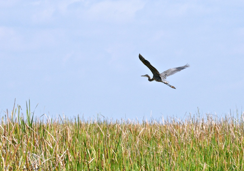 Flying Over The River Of Grass