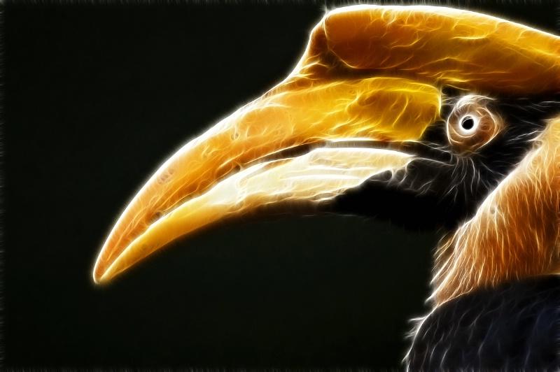 Hornbill--Fractalius