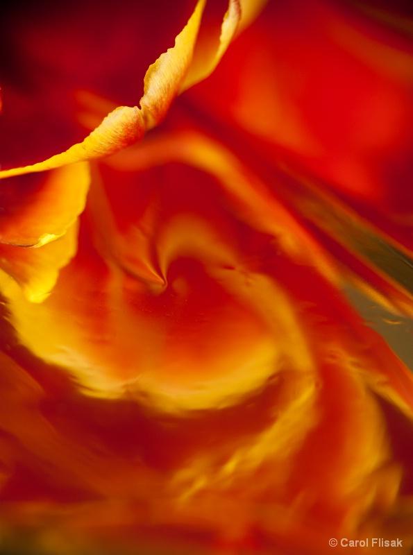 Abstract Tulip Swirl
