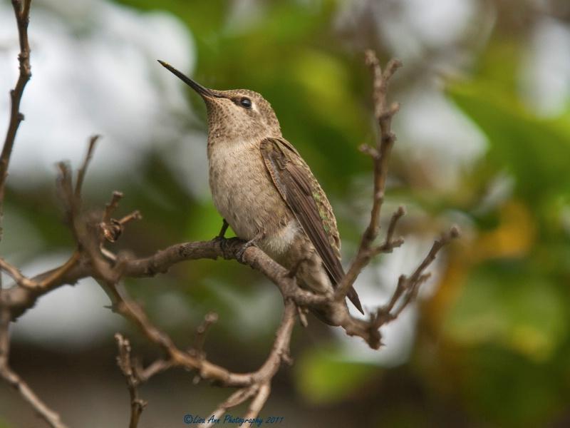 my baby humming bird