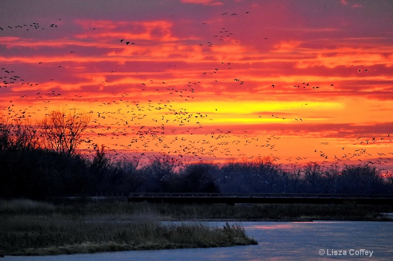 Platte River Sunset with the Cranes