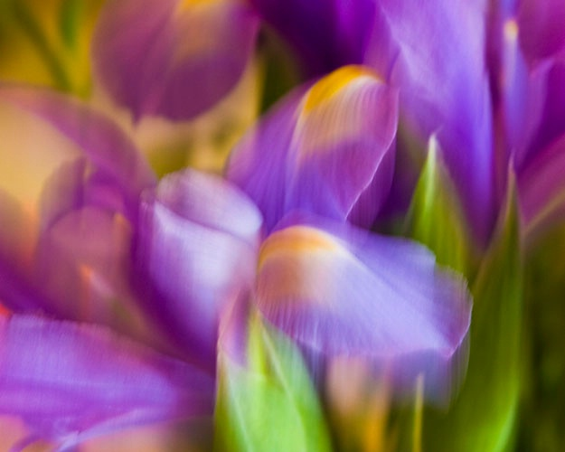 dancing iris 4