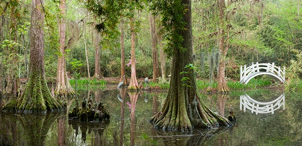 Magnolia Gardens Cypress Swamp Pan 5