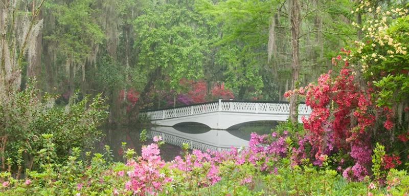 Magnolia Gardens Bridge 6725