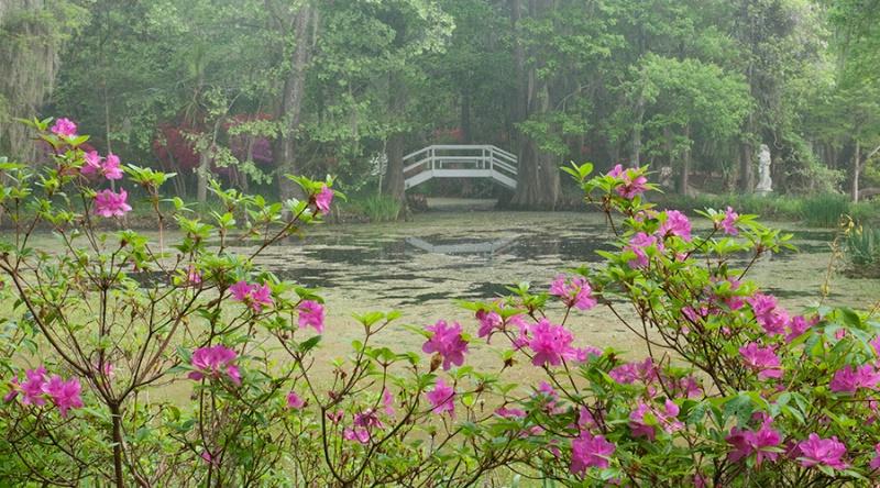 Magnolia Gardens Azalea and Bridge 6735