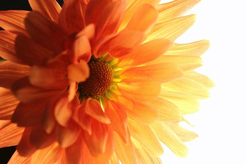 light up my flower