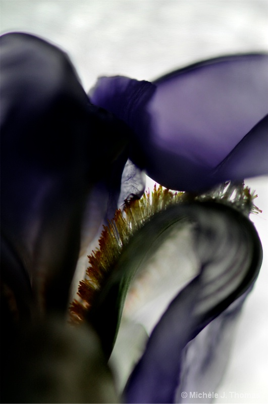 Iris From A Different View !