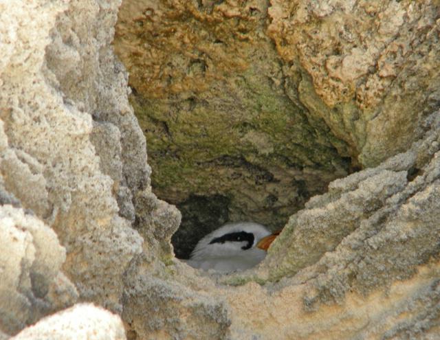 longtail on nest