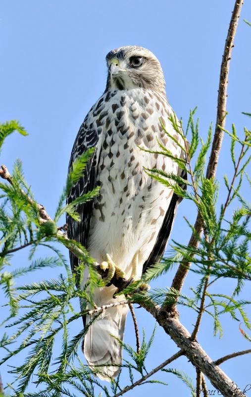 Falcon's Rest