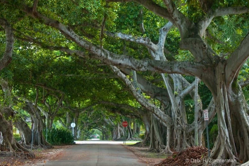 Coral Gables Streets