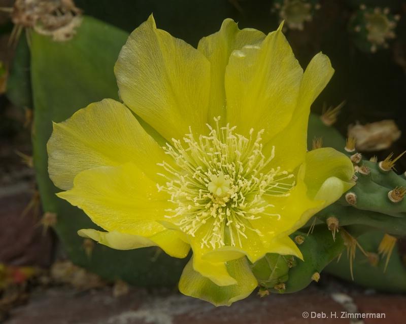 Key West Cactus Flower