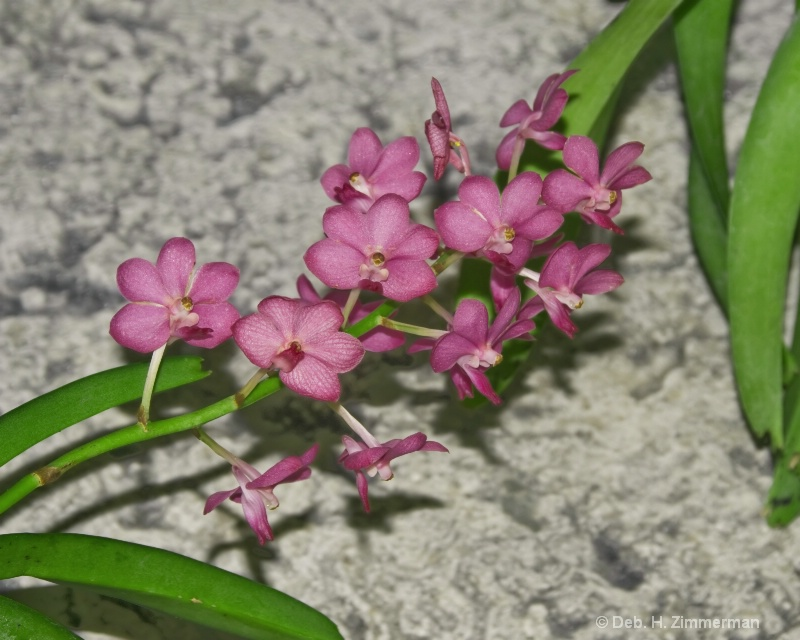 Magenta Orchids for Mark