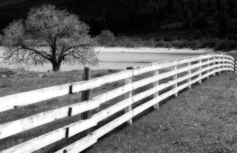Fenceline at Wolf Ranch