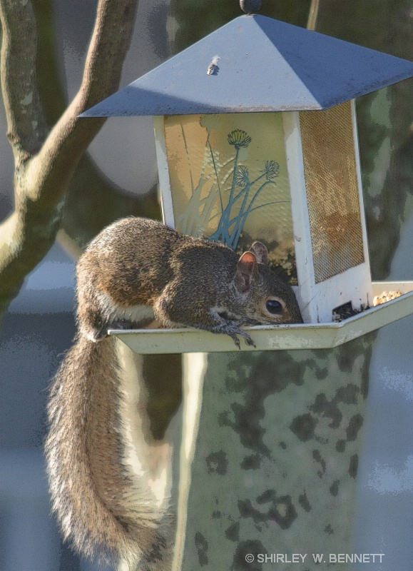 AND NOW, A SQUIRREL INVADES BIRD FEEDER