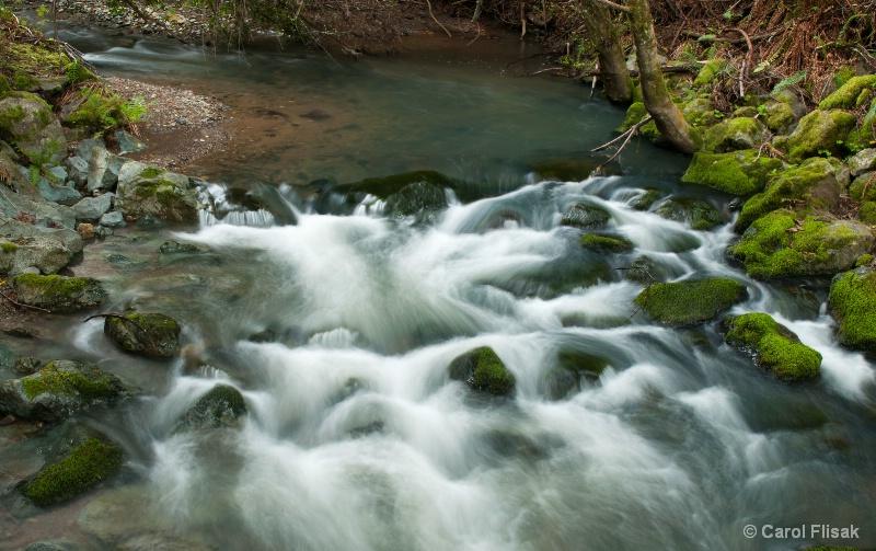 Redwood Creek ~ Muir Woods