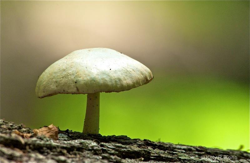 Mushroom in the Woods