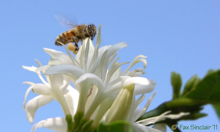 Bee on Coffee 7