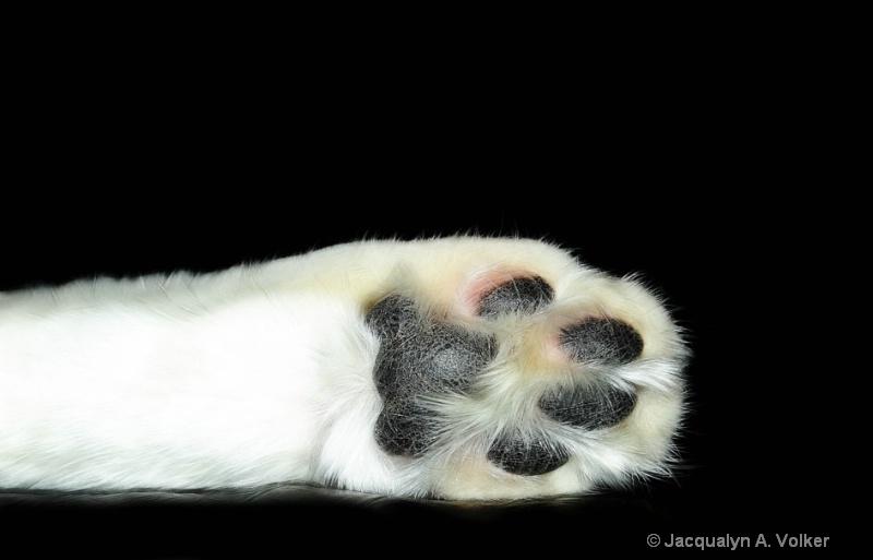 Miss Sock's Sock!