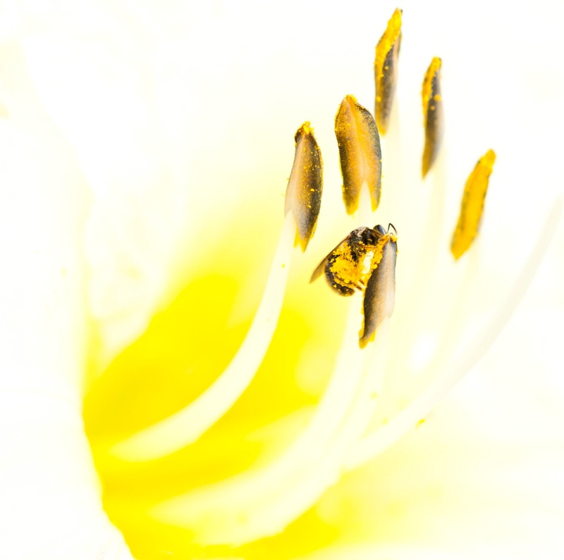 Busy as a a Bee