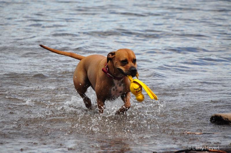 Dog Playing at Flathead Lake in Bigfork, Montana