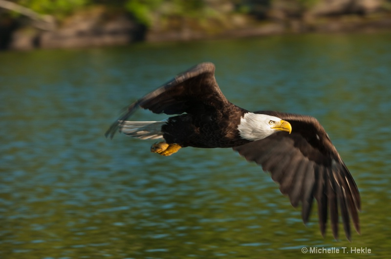 Eagle in motion