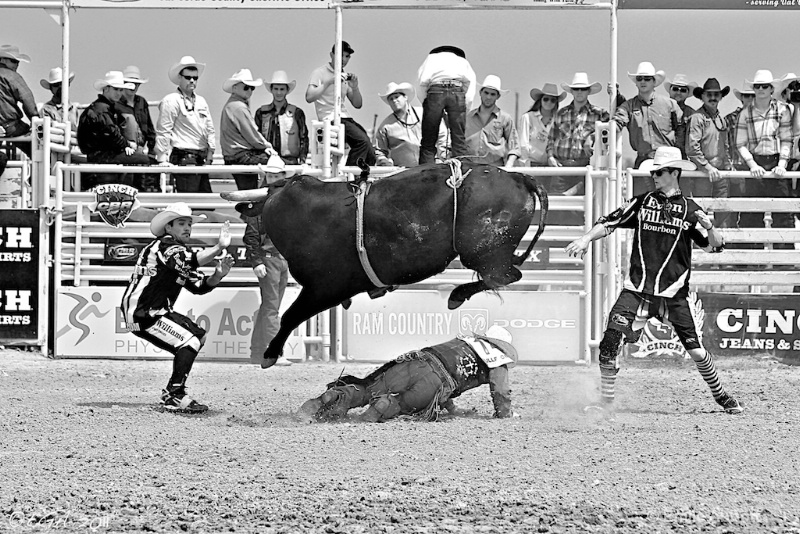 Bull Fighters Save the Day
