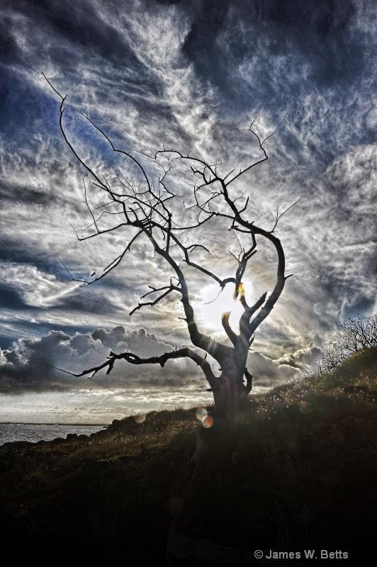 Tree in spotlight