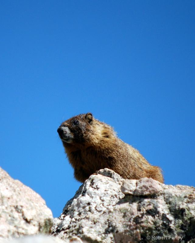 Marmot in the sky