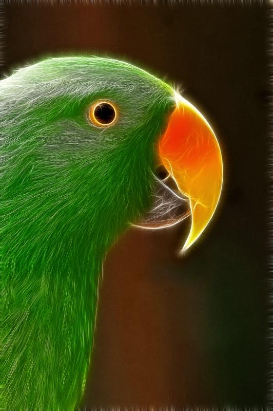 Busch Gardens Parrot