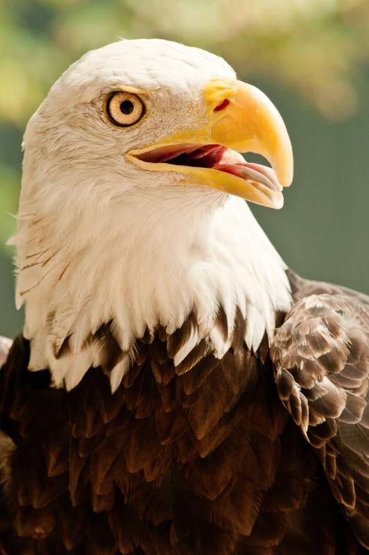 Busch Gardens Eagle