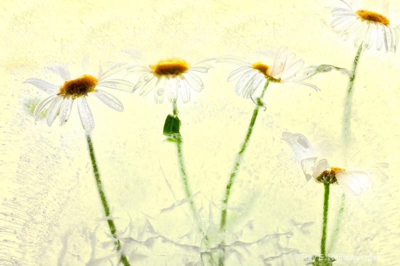 img 8668 Flower Ice