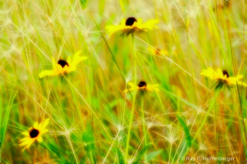 img 8931 Flower 11