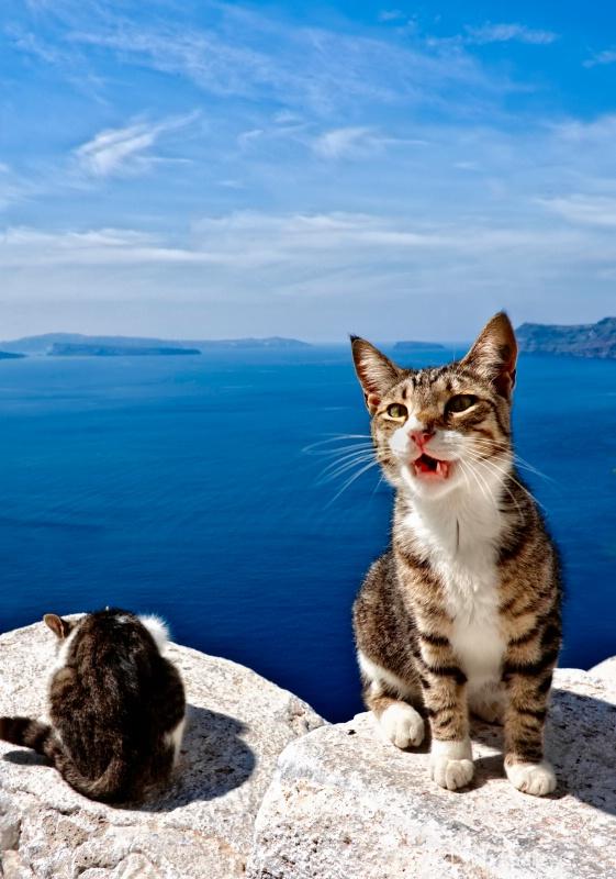 Kitties of Santorini