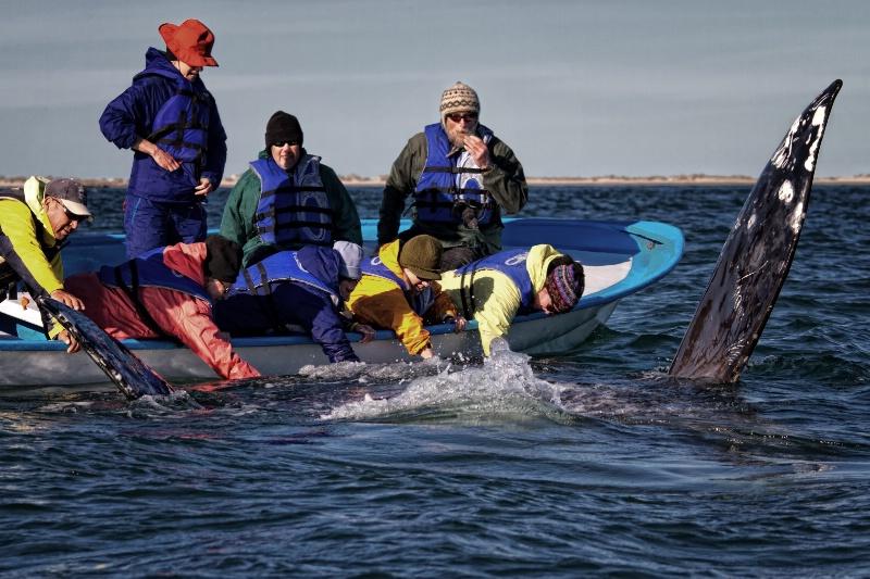 Sun Fun and Whales
