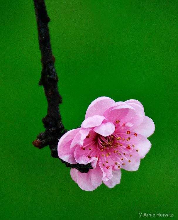 In Bloom - II