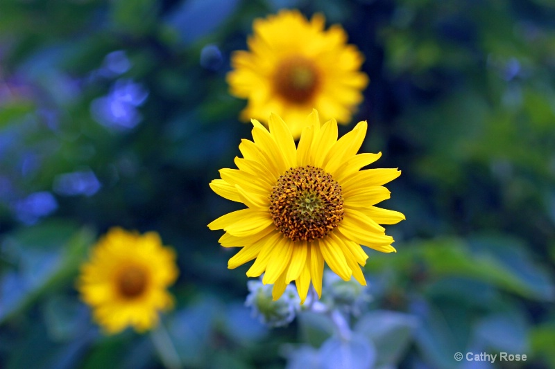 -Floating Sunflower-