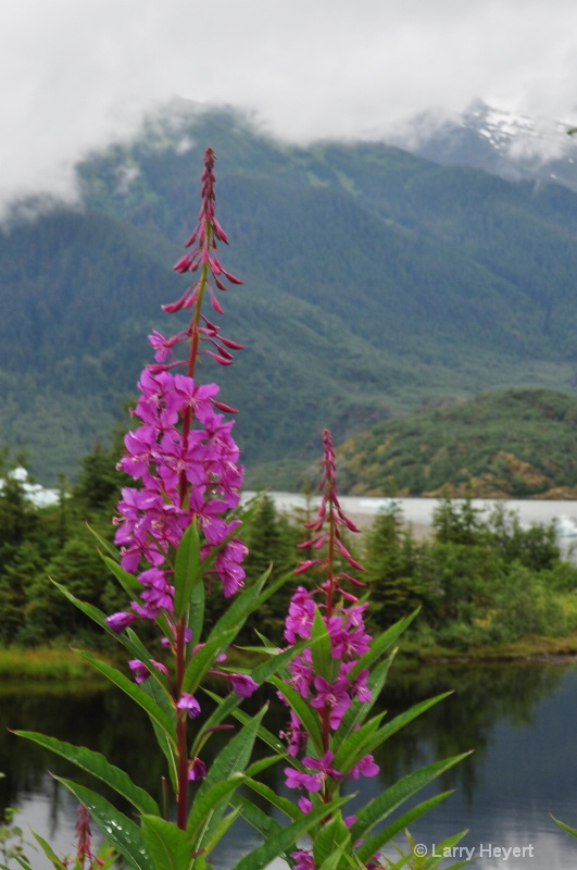 Flowers at Mendenhall Crater- Juneau, AK