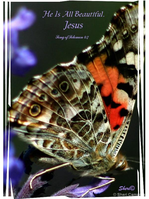 Butterfly   -  S 008