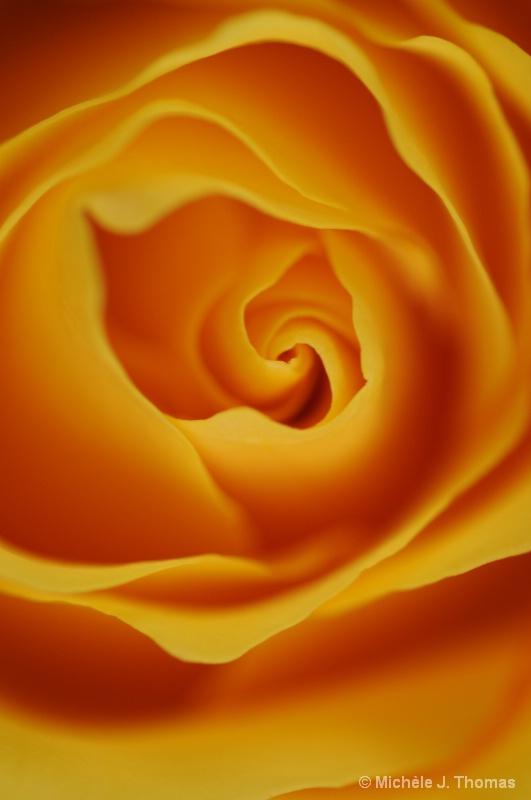 Brilliant Rose !