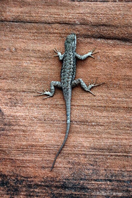 not that gecko