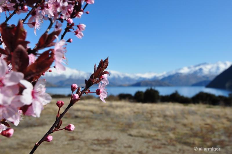 Spring has Sprung in Wanaka New Zealand