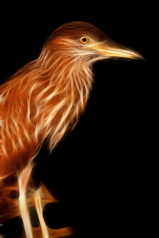 Night Heron--Fractalius