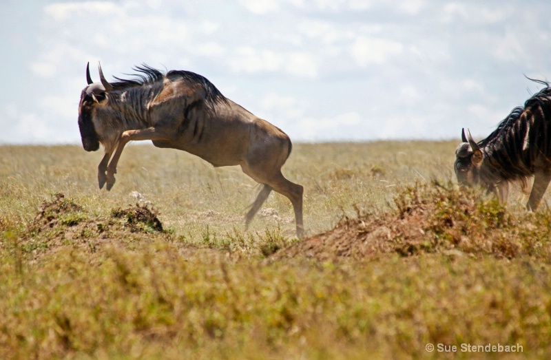 Great Wildebeest Migration II, Serengeti, Tanzania