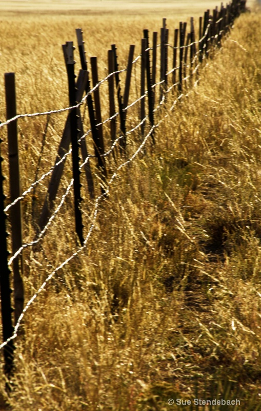 Riding the Fence II, Buena Vista, CO