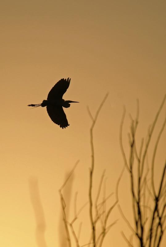 Crane In Sillouette