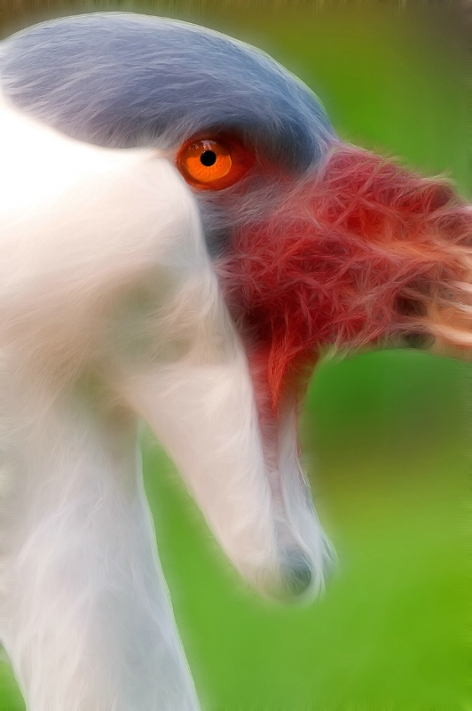 Close Up of Wattled Crane -- Fractalius