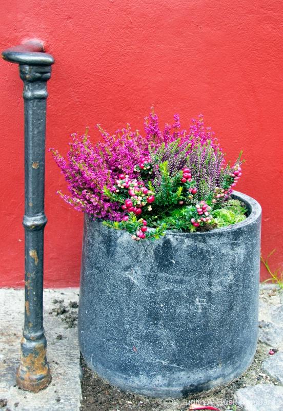 streetside flowers