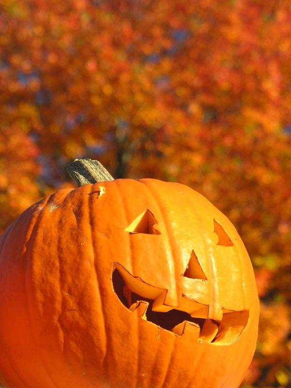 Keene pumpkin