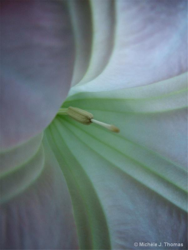 Inside My Trumpet Flower !